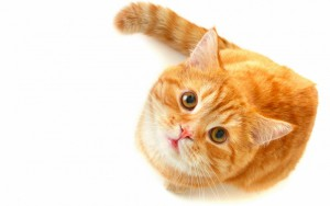 У кота выпадает шерсть