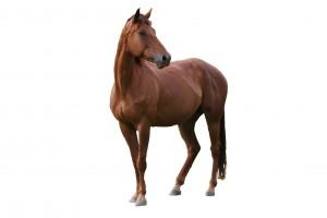 Что ест лошадь