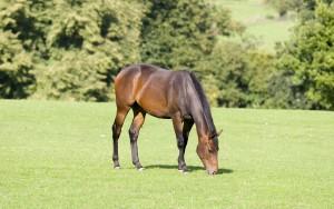Лошадь питание