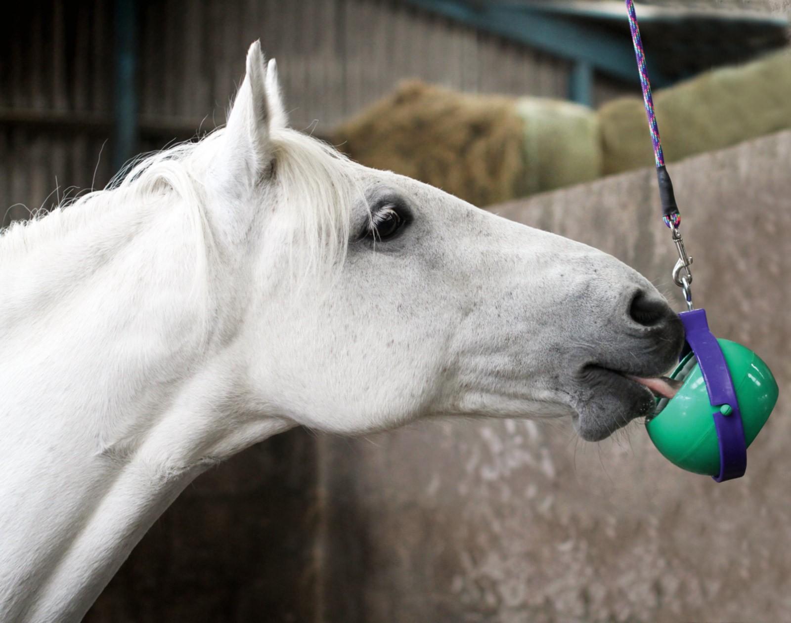 Как сделать соль на лошадь