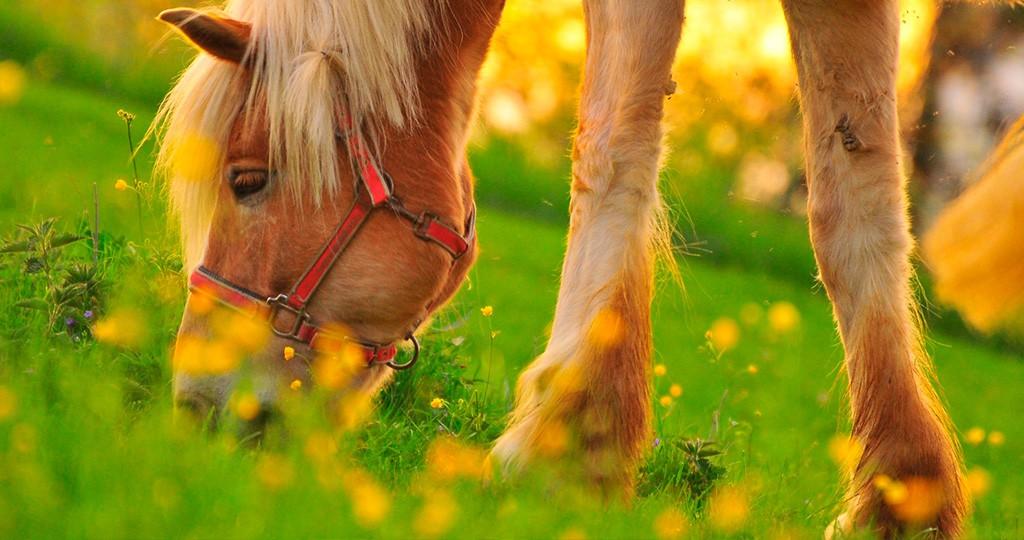 Чем кормить лошадь — правильное и здоровое питание