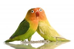 Фразы для попугаев