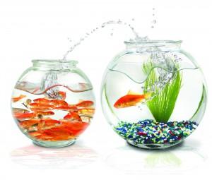 Cовместимость рыбок