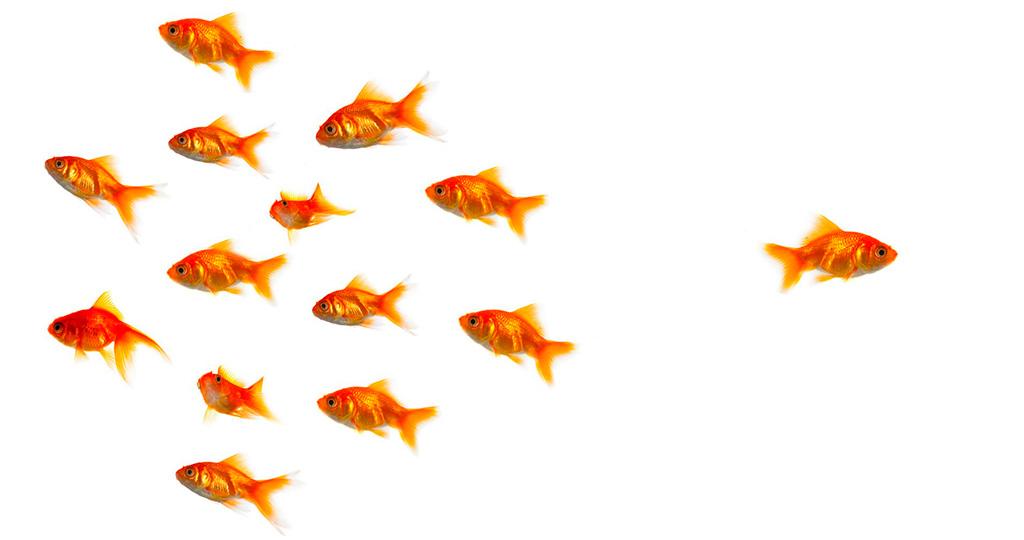 Совместимость рыбок в аквариуме - какие нюансы стоит учесть?