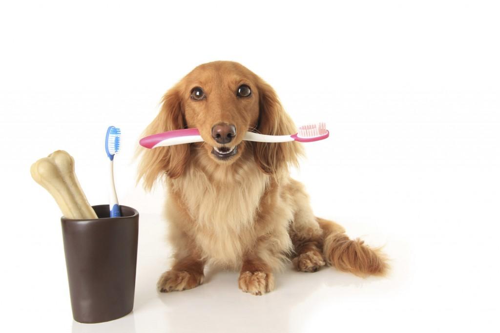 Чистить зубы собаке
