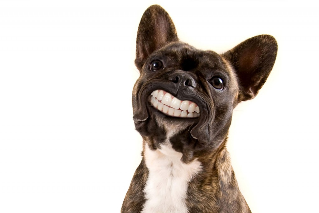 Чистка зубов собакам без наркоза