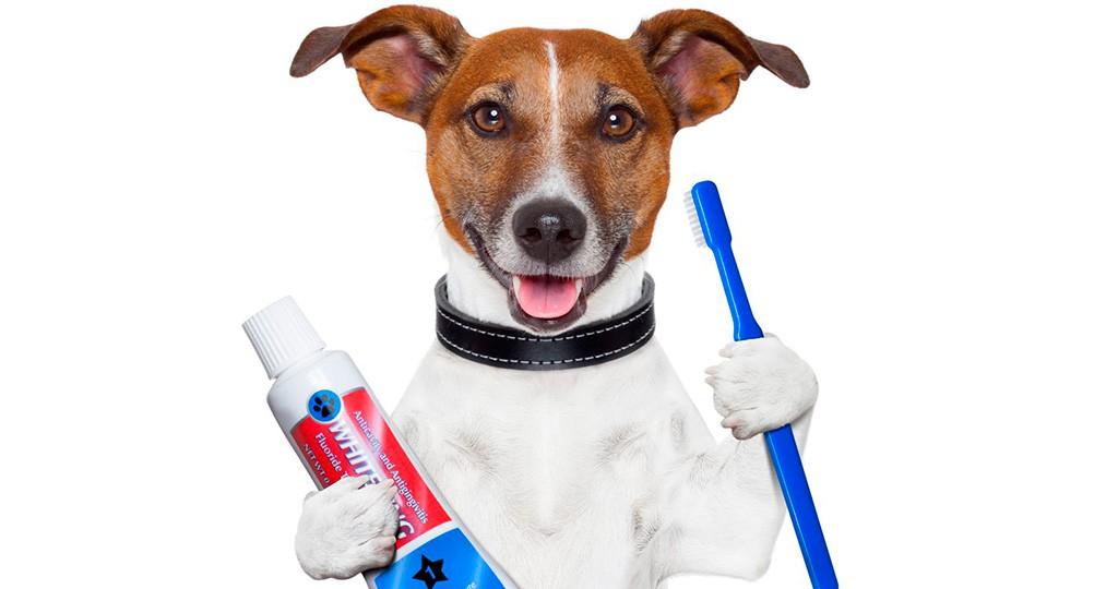 Как правильно чистить зубы собаке - правила и средства чистки