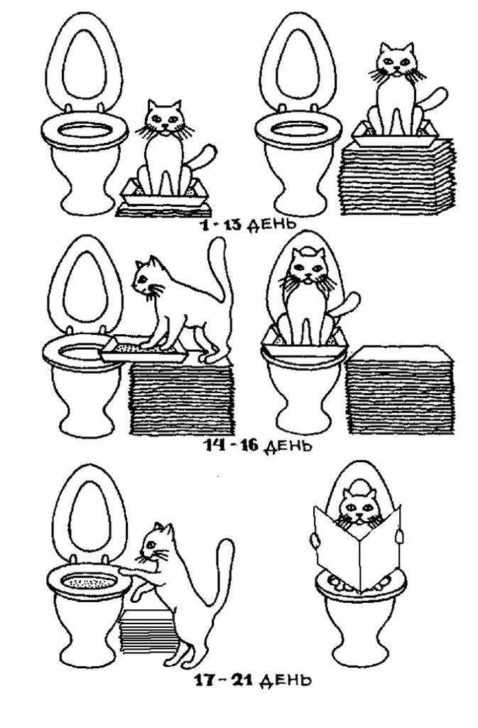 часто и понемногу хожу в туалет по большому тёлки