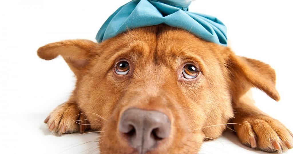 Камни в почках у собак - причины, лечение и профилактика камней