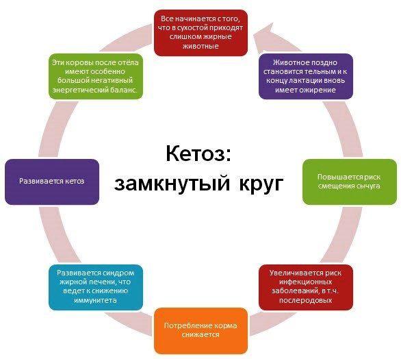 Кетоз симптомы