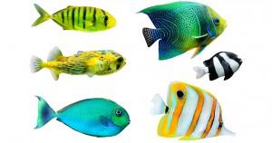 Плавниковая гниль - причины и лечение гнили в аквариуме