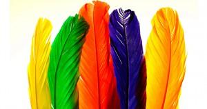 Почему у попугая выпадают перья? Причины и лечение выпадения перьев