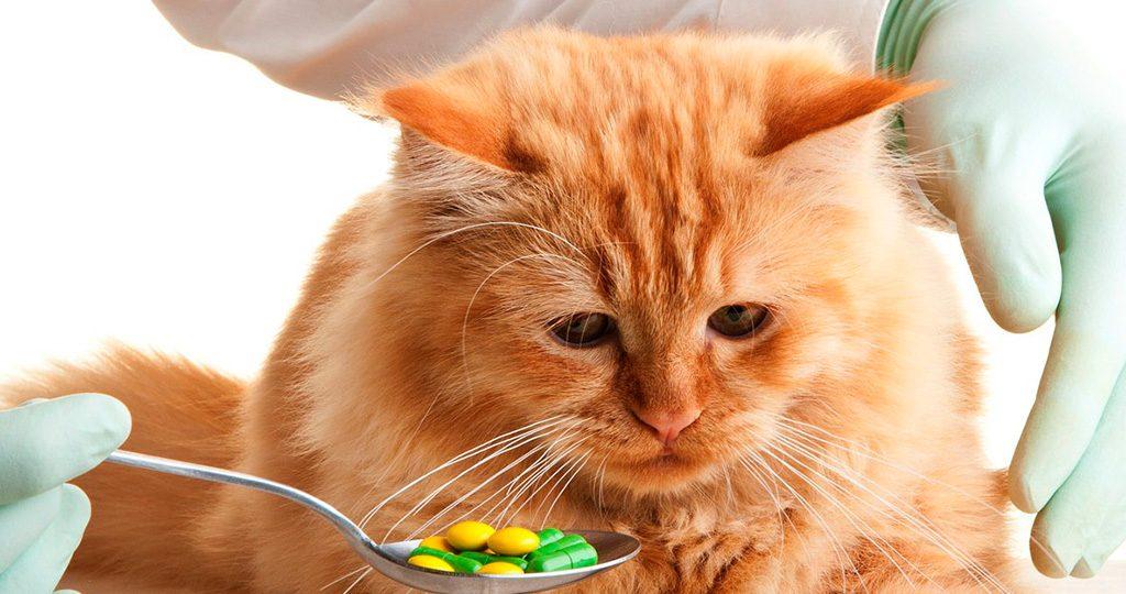 Что делать, если кошка отравилась?