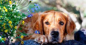 Клещи у собак - признаки, лечение, профилактика клещей