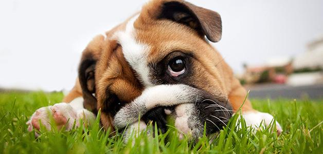 Симптомы отравления собак