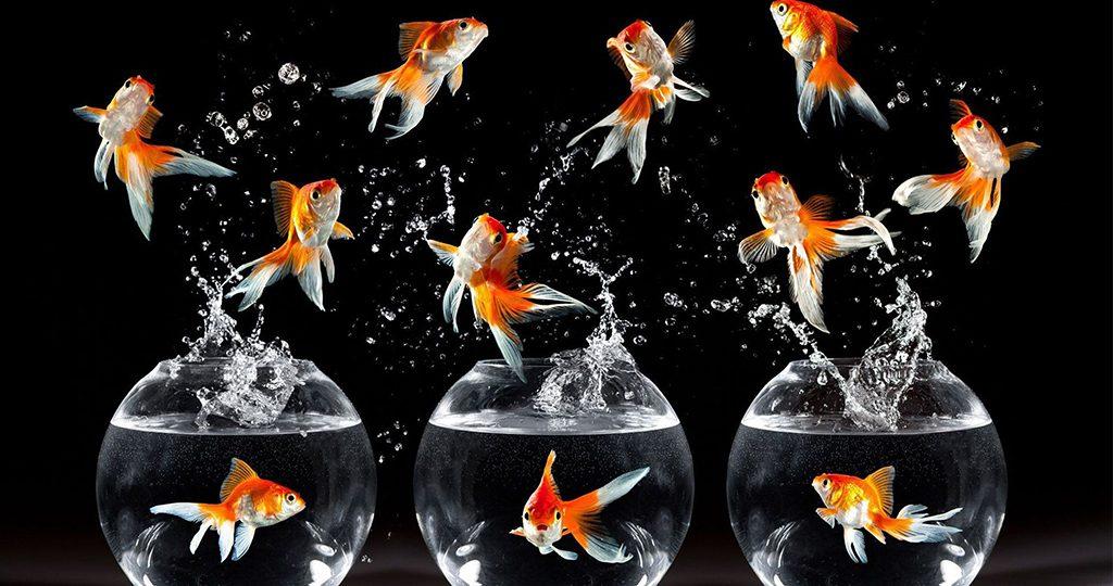 Болезни золотых рыбок – внешние признаки и лечение