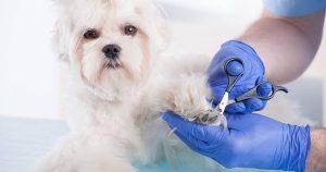 Как легко подстричь когти собаке в домашних условиях