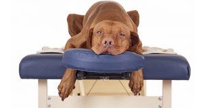 Растяжение у собаки - симптомы и лечение повреждения связок