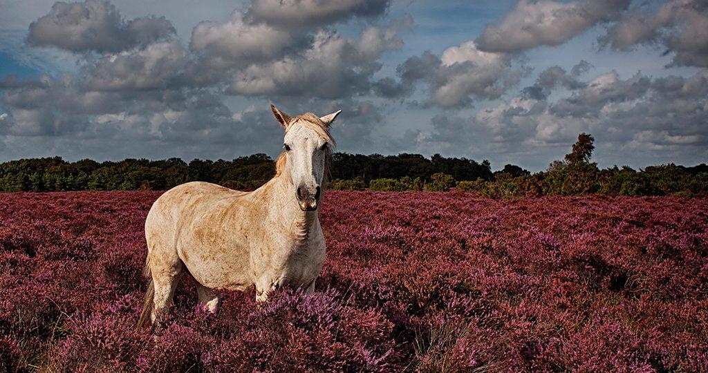Кашель у лошади - причины, профилактика и лечение