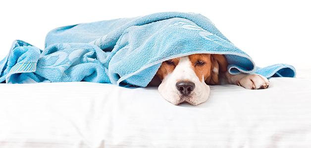 Чем лечить чумку у собак