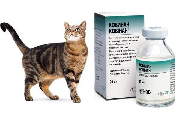 Контрацептивы для кошек в уколах