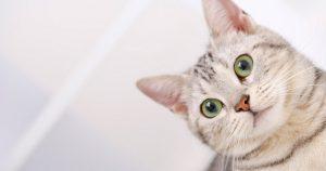 Контрацептивы для кошек: виды и влияние противозачаточных средств