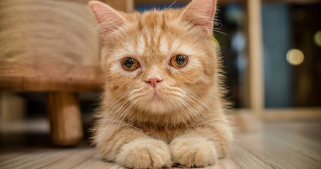 Кошка после стерилизации не ест