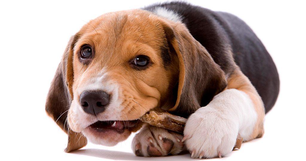 Кости для собак: за или против