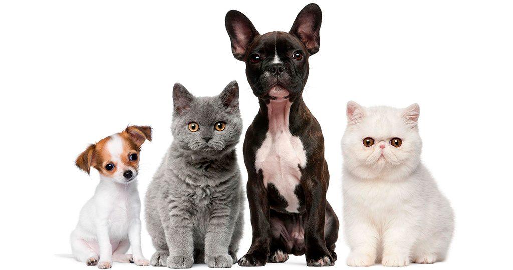 Способы фиксации кошек и собак для уколов и таблеток