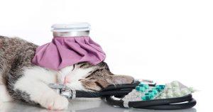 Кальцивироз у кошек – симптомы, лечение и советы владельцам