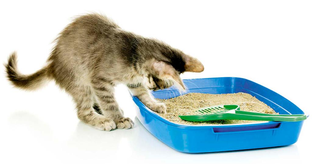 Что делать если кошка перестала ходить в лоток