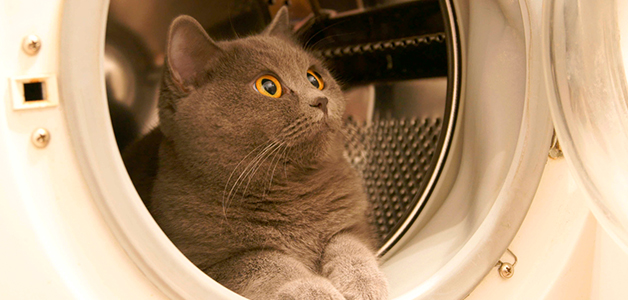 Кошка носится по квартире