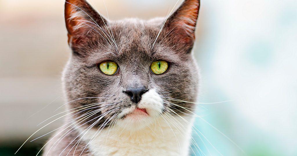 Опасные места для кошек в квартире