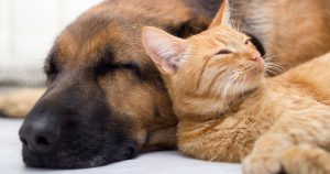 Как подружить кошку с новым питомцем