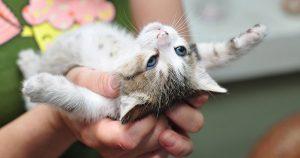 Пупочная грыжа у котят — причины и лечение