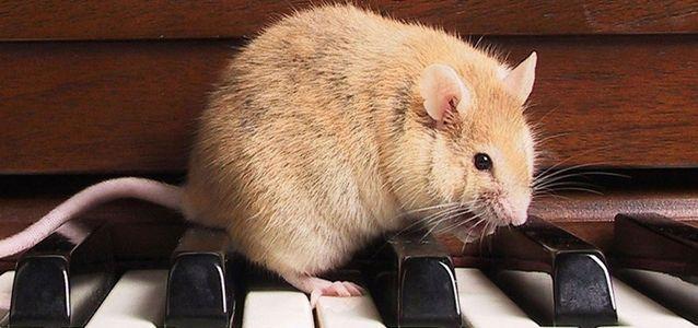 крысы переносят бешенство