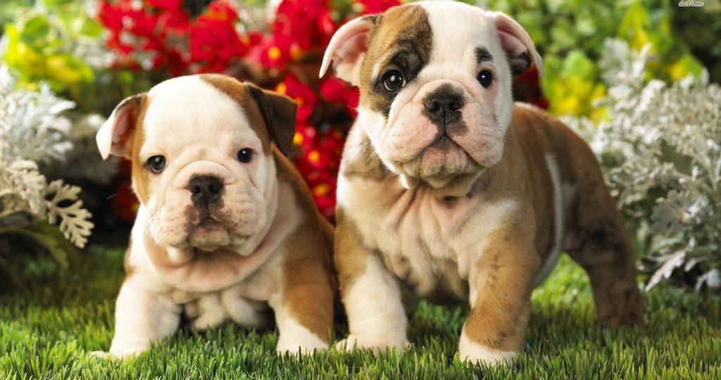 Цистит у щенка – причины и лечение