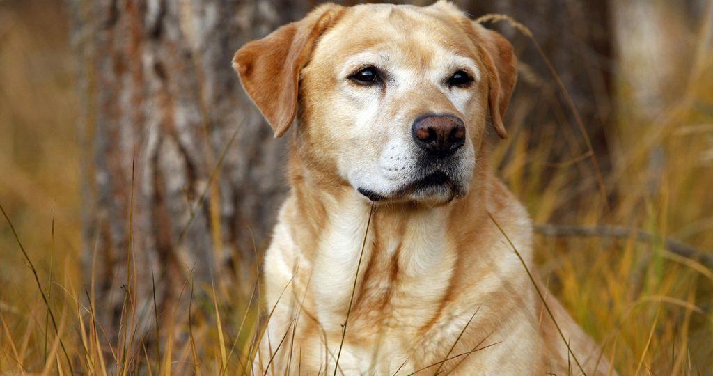 Энтерит у собак – причины, симптомы и лечение