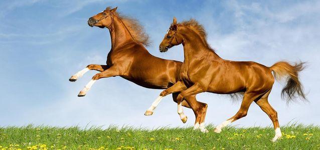 Мокрецы у лошадей