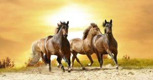 Мокрецы у лошадей – признаки, симптомы и лечение