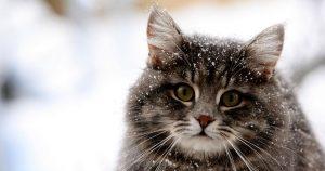 Перхоть у кошки – причины и лечение