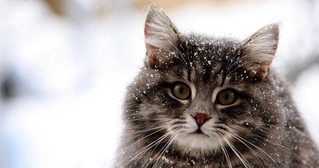 Причины появления перхоти у кошек и собак