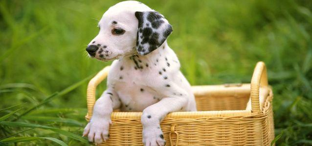 Лечить подушечки лапы у собаки