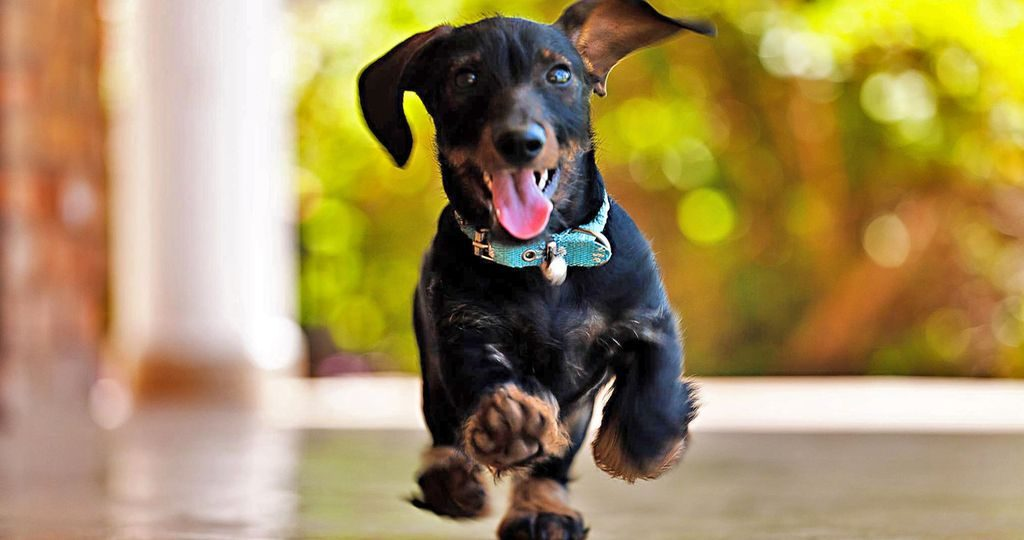 Что делать, если собака порезала подушечку на лапе