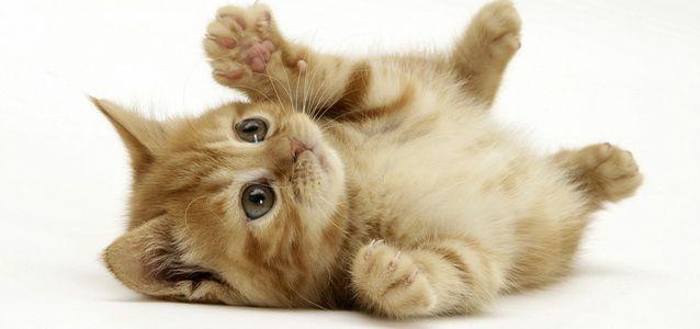 У котенка выпадают усы