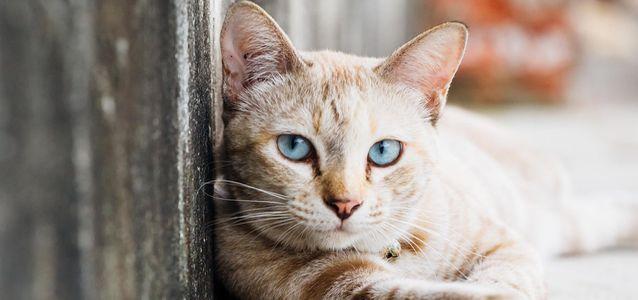 Почему у кота выпадают усы