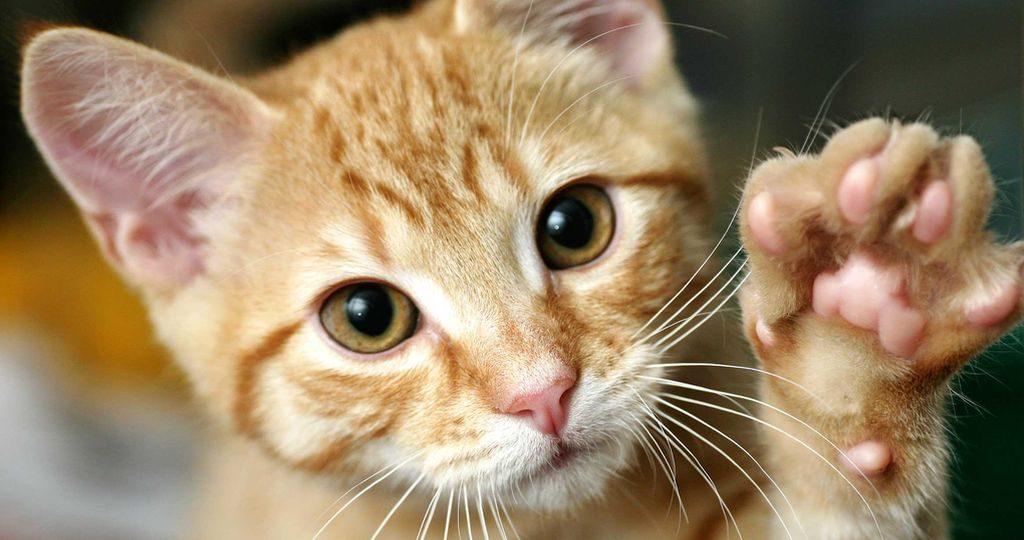У кота выпадают усы – причины, лечение и опасность