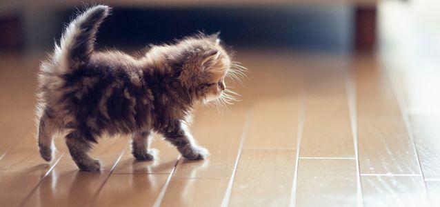исправить котенку сломанный хвост