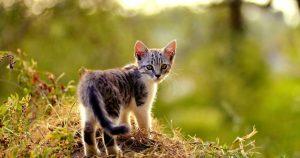 У котенка сломан хвост: признаки и способы исправления