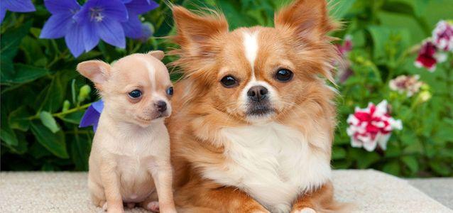 У собаки гноятся и слезятся глаза